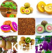 New ListingMini Actinidia Small Potted Plants Garden Fruit Trees Bonsai Kiwi 100 Pcs Seeds