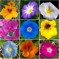 50 Samen Rankende Mischung Wicken Kapuzinerkresse Trichterwinde Blumenmischung