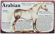 Arabian TIN SIGN metal wall home decor horse vtg western barn bar art poster OHW