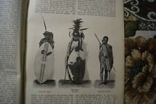 1881 neue Welt 27 Afrika Zulu Rittersporn