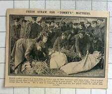 1915 Fresh Straw Being Gathered In France For Soldiers Mattress