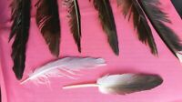 SALE!!!  NATURAL FEATHERS x8 SEAGULL LARGE + SMALL FREE fallen feathers UK