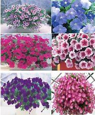 Petunia Seeds 25 Pelleted Seeds Opera Supreme Mix Trailing Pelleted