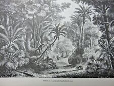 Antique Print of Trees, Landscape of an Indian Forest, circa 1869