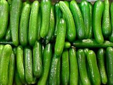 20 Persian cucumber seeds - Free shipping- Non GMO Buy 4 get 1 FREE !!!