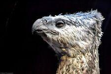 A3 Photo Print: Buckbeak the Hippogriff (WBTour London)