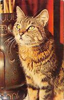 Br43966 cat chat animal