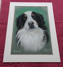 LARGE ORIGINAL BERNESE MOUNTAIN DOG PASTEL CHALK CHARCOAL DOG DRAWING MOUNTED