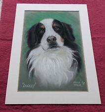 More details for large original bernese mountain dog pastel chalk charcoal dog drawing mounted