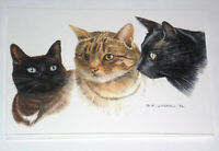 CATS CARDS x 12. JUST 25p, ILLUSTRATED by DAVID WORRALL, ( B137