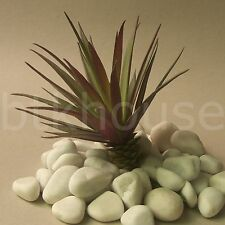 200mm Artificial Mini Reptile Cactus Succulent Desert Plant Terrarium Decor (GR)