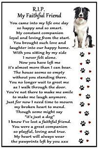 Border Collie Gift RIP My Faithful Friend - dog loss sympathy bereavement