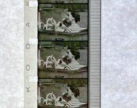 """Advertising 16mm Film Reel - ORAGEN Consumer Drug Corporation """"LEGS"""" 60 (C32)"""