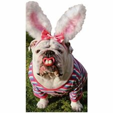 Avanti Press Bulldog With Bunny Teeth Little Big Funny Humorous Die Cut Dog East