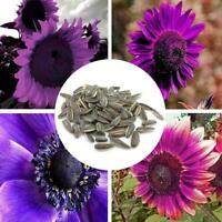 100 Pcs Purple Sunflower Flower Seeds Mix Colors Perennial Potted Bonsai Sa F6D1