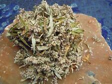 Artemisia erbe wicca/pagano/Incantesimo forniture/Erbe/Incenso Stregoneria