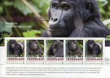 Netherlands 2018 MNH Mountain Gorilla 5v M/S Gorillas Monkeys Animals Stamps