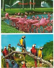 2 Vintage Hialeah Park & Parrot Jungle Postcards - Parrots and Flamingos  1950s