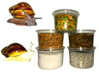 5 pot stack pack for Giant African Land Snails, GALS, Snail