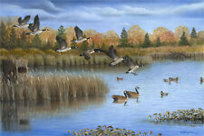 """48 """"Decoyed In"""" Ducks 20x27 Paper Print by Robert Metropulos"""