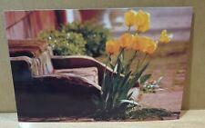 Welcoming Committee ~ Art Postcard~ Larry Kanfer Photographer