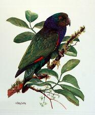 Dominica WWF Birds of the Caribe PANEL PASTILLA Premier Día 1° FDC 828