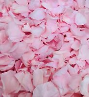 Light Pink Biodegradable Confetti Rose Petals Large Natural