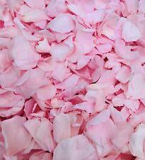 Rose Clair Confettis Biodégradables Pétales de Rose Grand Naturel