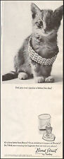 1964 Vintage ad for Bond Street By Yardley`Kitten Bracelet (050216)