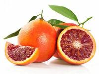 Red Lemon Tree Also Is Blood Orange Organic Fruit Bonsai High Survival Rate Food
