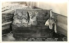 Frashers RPPC Postcard Lion Cubs Griffith Park Zoo Los Angeles CA unposted