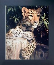 Leopard (Panther, Jaguar, Big Cat) Wild Animal Wall Decor Framed Art Picture
