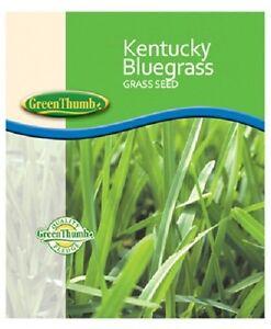 Barenbrug 491123 50 lb Bulk Bag 85/80 Kentucky Bluegrass Grass Seed