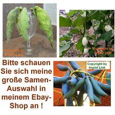 EIERBAUM - blaue Gurken - Früchte die aussehen wie Vögel - 3 Samen-Sorten im Set