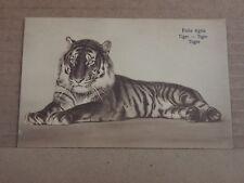 Postcard animals Tiger lay down Dutch Card  unposted