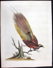 1744,EDWARDS GEORGE Painted by Hand COPPER ENG. EXOTIC BIRDS UN7