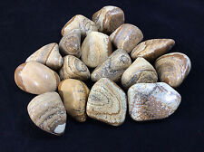 Large Tumbled Picture Jasper Stone Earth Connection Stone Crystal Healing
