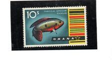 Ghana fauna acuatica peces año 1959-61 (N-476)