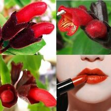 Garden Plant Family Lipstick Flower seeds 200pcs red flowers Garden Balco