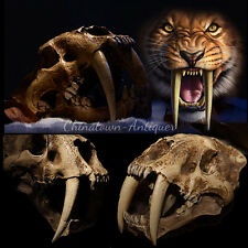 Artificial bone Smilodon Saber-toothed Tiger Skull Museum Taxidermy Replica #359