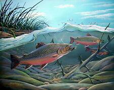 Doug Walpus Brook Trout Fish Print Fly Fishing Wildlife Art 11 x 14 Home Decor