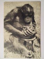 Tiere, Affe, Tierbaby, ca. 50er Jahre