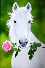 WHITE HORSE - PINK ROSE POSTER (91x61cm)  NEW LICENSED ART