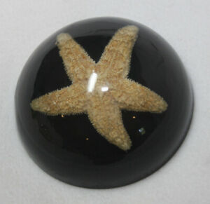 Vintage Clear-Vue Products Resin Lucite Starfish Design Paperweight