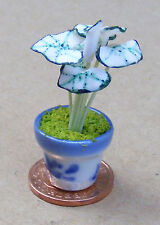 1:12 Scale Green & White Plant In A Pot Tumdee Dolls House Garden Accessory G15