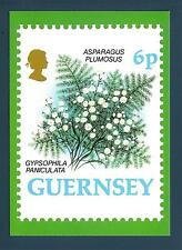 GUERNSEY - 1993 - CARTOLINA - FIORI: Asparagus Plumosus- Gypsophila Paniculata
