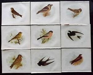 Anne Pratt 1894 Lot of 12 Antique Bird Prints. Book Plates