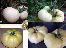 25x Weiße Tomaten White Queen Pflanze essbar F1 Gemüse Samen Garten Neuheit #174