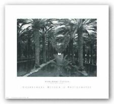 Palm Grove, 1966 Ansel Adams Art Print 16x22