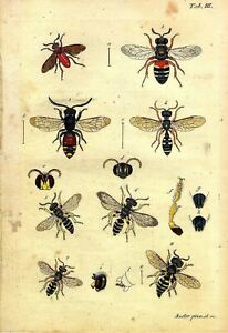 2 x Natural History Prints 18th Century Insects Pictures Reprints